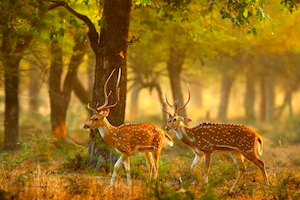 Bondla Wildlife Sanctuary Taxi Tour Goa